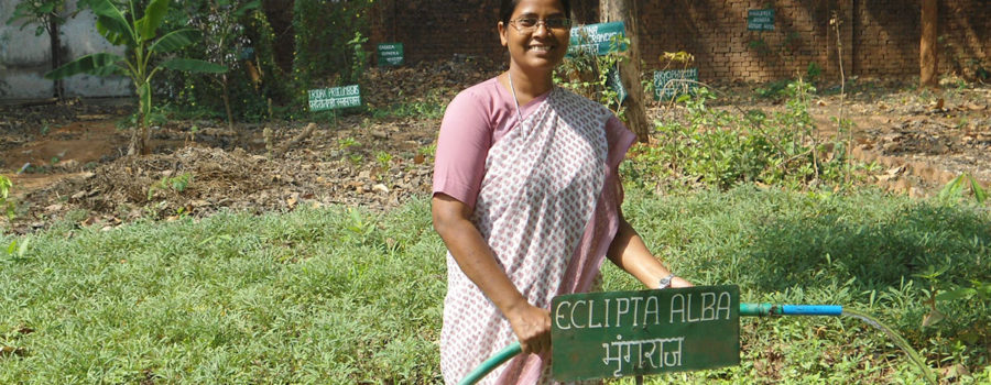 Sr. Pushpa caring for the herbal plants in her garden
